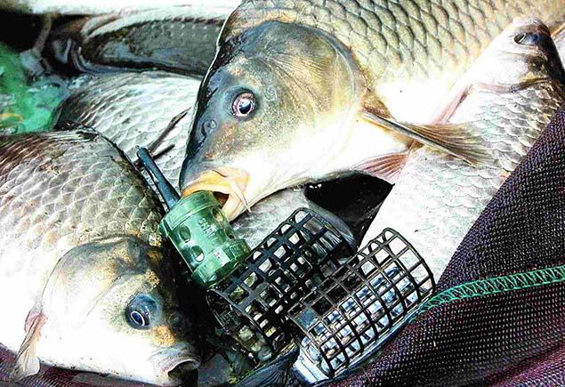 Фидерная рыбалка на карпа