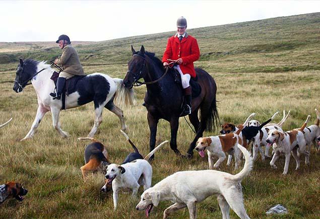 Гончие собаки для охоты