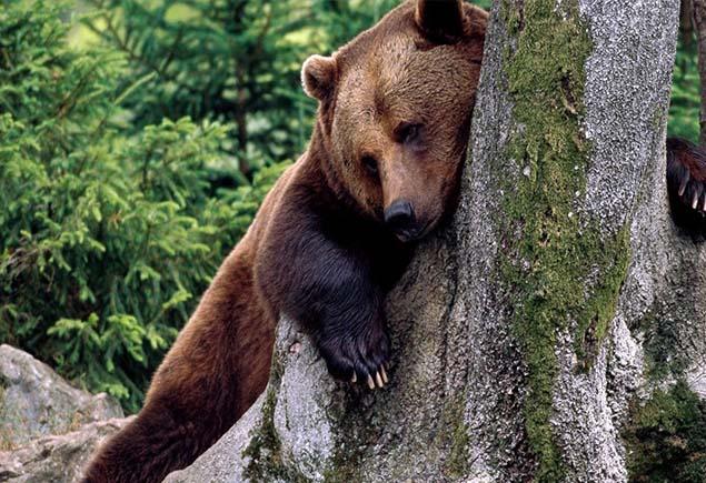 Как охотиться на медведя